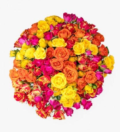 Sunny Spray Roses