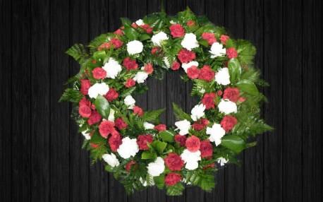 Carnation - WRE59