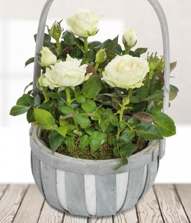 White Rose Basket