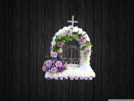 Lilac Shades - GOH5