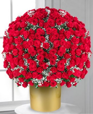 500 Red Roses? Get In There!