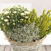 Mixed Plant Pot