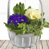 Spring Primrose Basket
